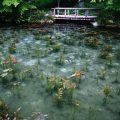 関市板取 根道神社のモネの池が噂通りの美しさ!まさに動く絵画か。