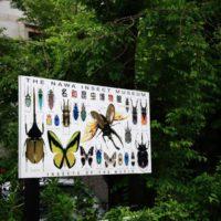 岐阜公園 名和昆虫博物館 1 モルフォチョウの色彩ヤバイ