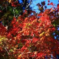 ひるがの高原 分水嶺公園の紅葉(水面ばっかり撮ってた)