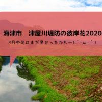 【海津市】津屋川堤防の彼岸花2020 今年の状況はどんな感じでしょう?