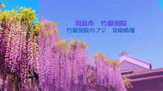 羽島市 竹鼻別院のフジの見頃